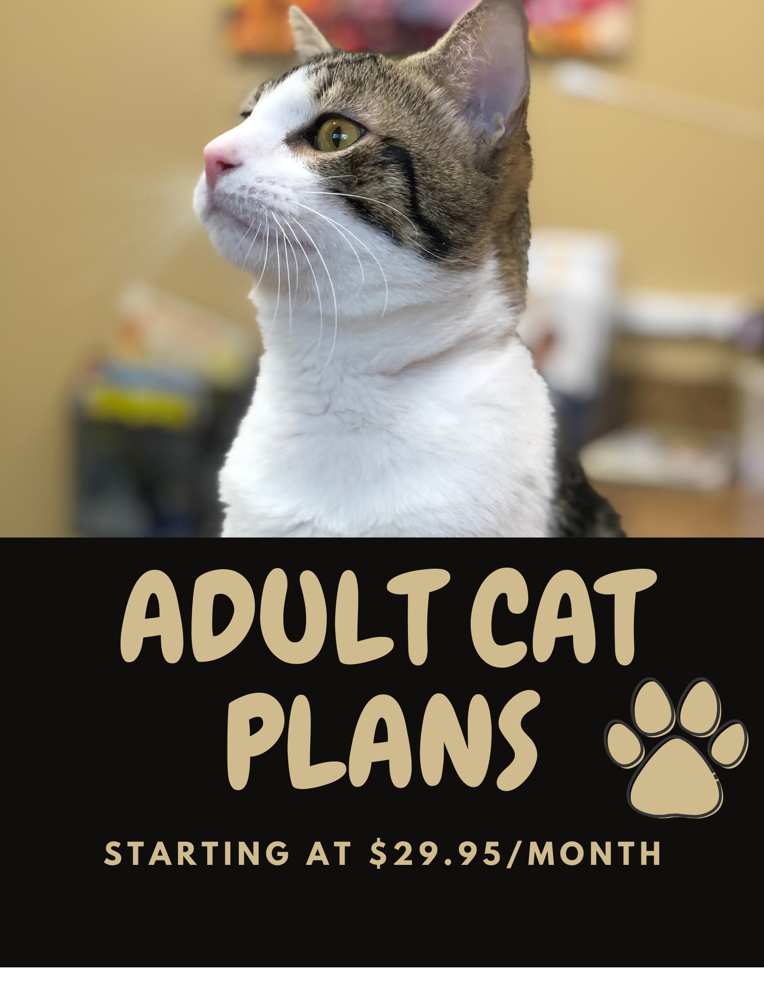 ADULT CAT PLANS WEBSITE
