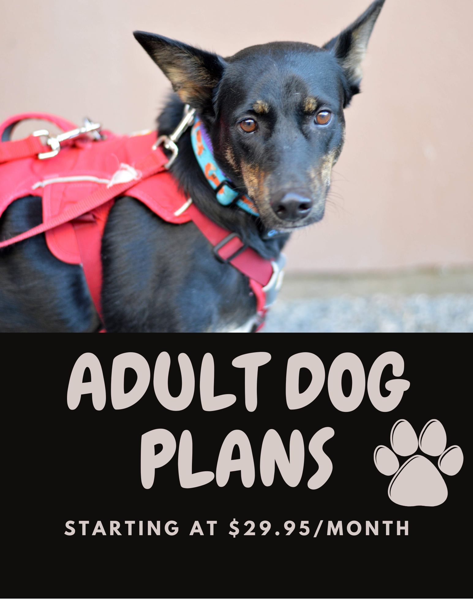 ADULT DOG PLANS WEBSITE