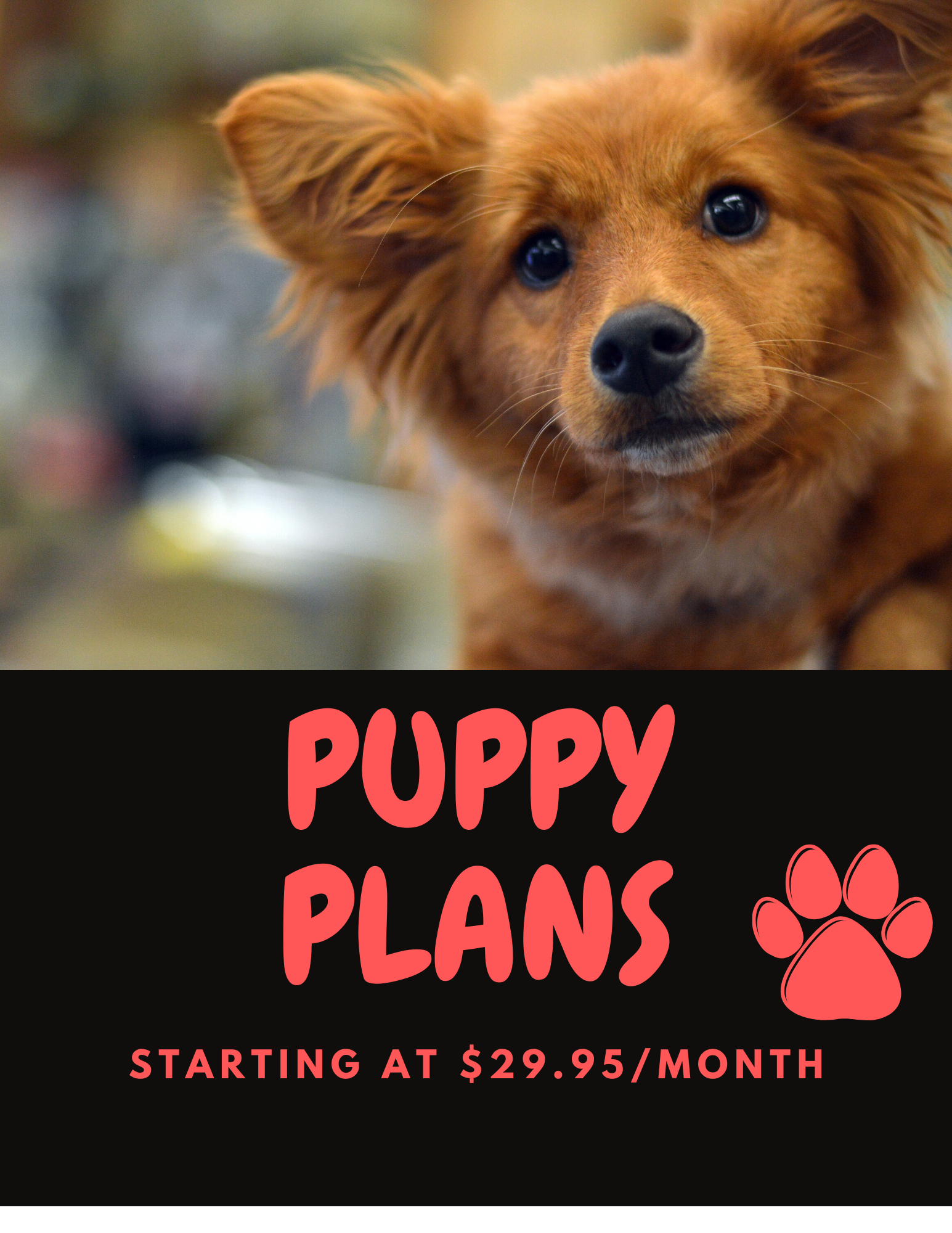PUPPY PLANS WEBSITE
